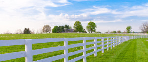 Horse-fence-country-crop